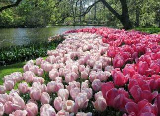 ogrodów na świecie